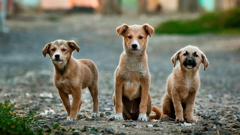 Звіт за великий збір допомоги притулкам тварин з UAnimals