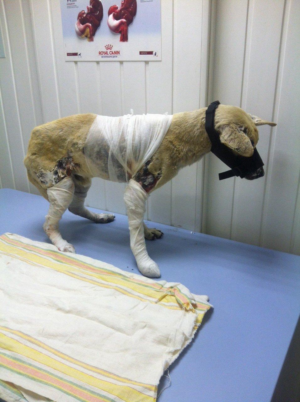 Порятунок тварин на Луганщині - пожежі